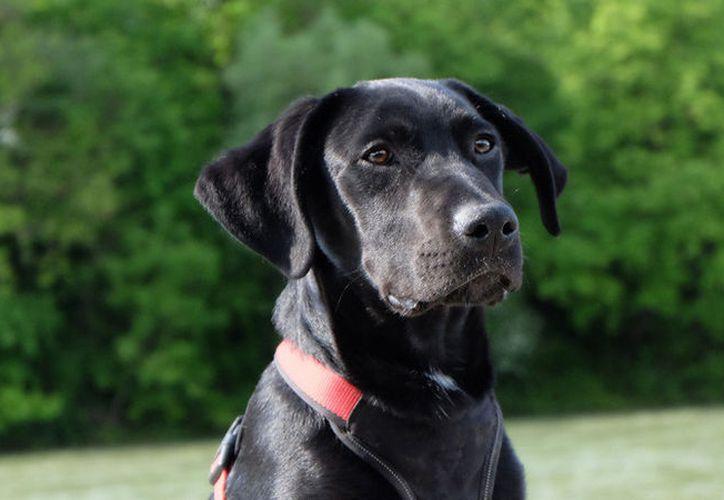 El dueño de los perros también relató que conoció a su compañera Samantha, con la que tiene dos hijas, durante la búsqueda de su mascota. (Pixabay)