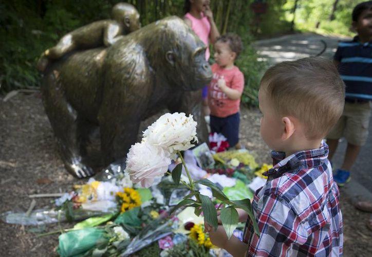Un niño lleva flores para dejarlas junto a la estatua de un gorila ante el clausurado recinto de gorilas del Zoológico y Jardín Botánico Cincinnati, el lunes 30 de mayo de 2016 en Cincinnati, Ohio, EU. (AP Foto/John Minchillo)