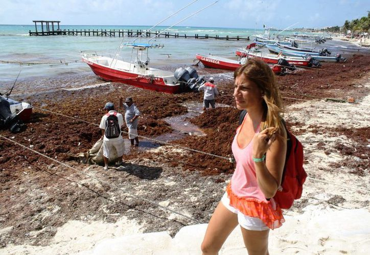 Toneladas de sargazo volvieron a recalar en las costas del centro de Playa del Carmen. (Octavio Martínez/SIPSE)