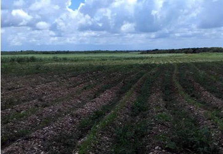 Con moderna tecnología lograrán que el agua residual sea empleada para riego de cosecha para consumo humano. (Milenio Novedades)