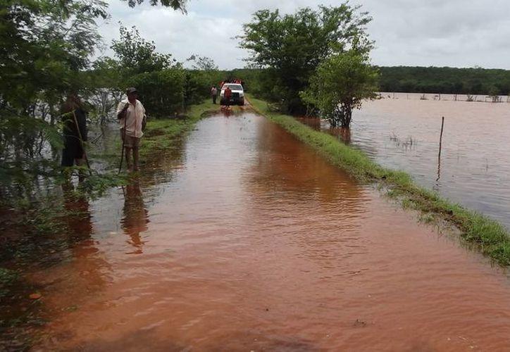 Decenas de hectáreas de cultivo se perdieron, a consecuencia de las torrenciales lluvias que inundaron el Cono Sur de Yucatán. (SIPSE)