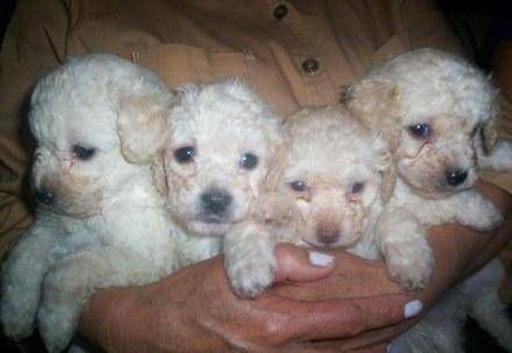 Los cachorritos tienen un valor de aproximadamente de 9 mil pesos. (Contexto/Internet)