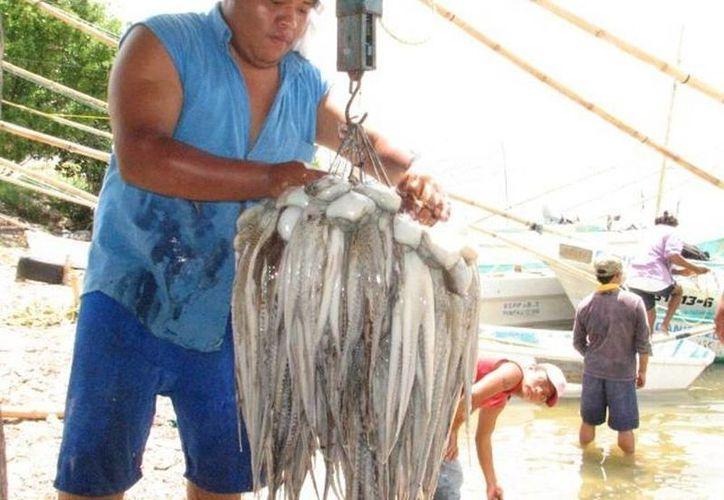 El pulpo es una de las principales actividades comerciales y pesqueras en Yucatán. (Archivo SIPSE)