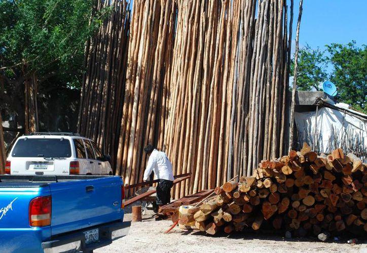 Con las certificaciones forestales el mercado de la madera en la entidad se volverá más competitivo. (Tomás Álvarez/SIPSE)