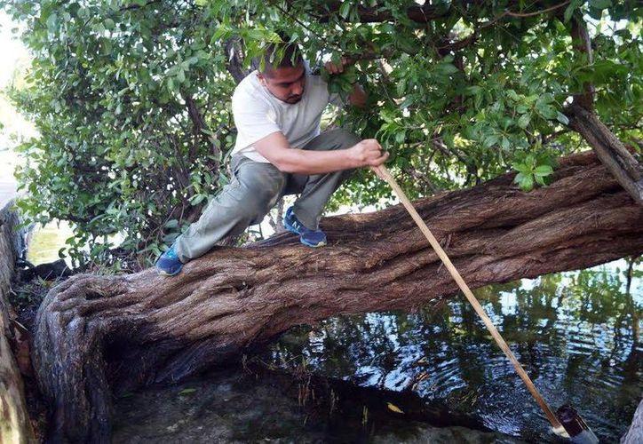 El CICY hace un llamado a todos los yucatecos a cuidar el manto acuífero del Estado. (SIPSE)