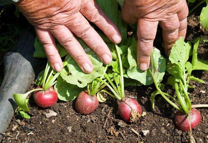 Con las cámaras los damnificados podrían acceder a comida fresca y nutritiva. (plantas.facilisimo.com)