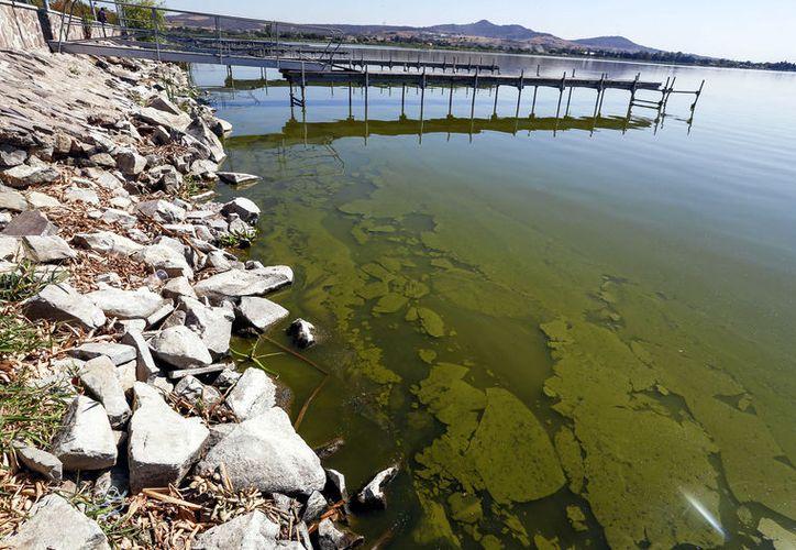 Investigadores crean plásticos a partir de algas
