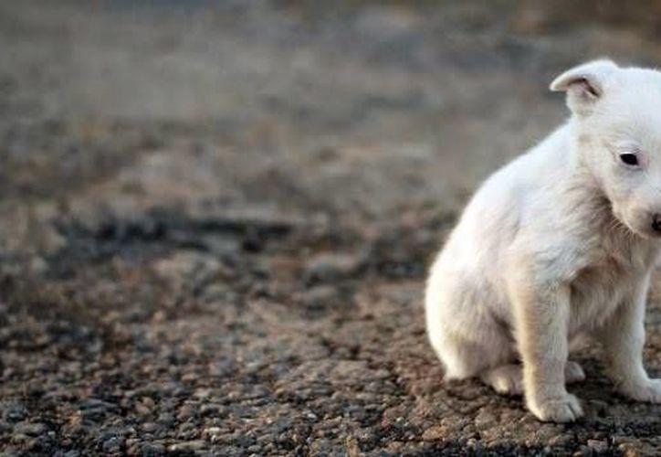 La exposición tiene el fin de crear conciencia sobre el maltrato animal. (Foto de contexto/SIPSE)