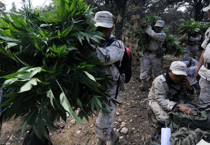 Según Parametría, en 2010 las opiniones eran pro legalización de drogas para contrarrestar al narcotráfico, pero que ahora las cosas son diferentes. (Archivo Notimex)