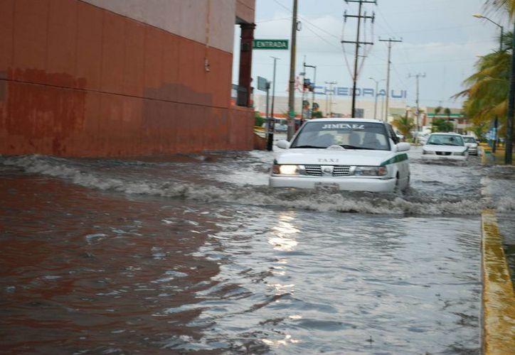 Los usuarios reportan desde inundaciones, baches, apagones, asesinatos, hasta mascotas perdidas. (Tomás Álvarez/SIPSE)