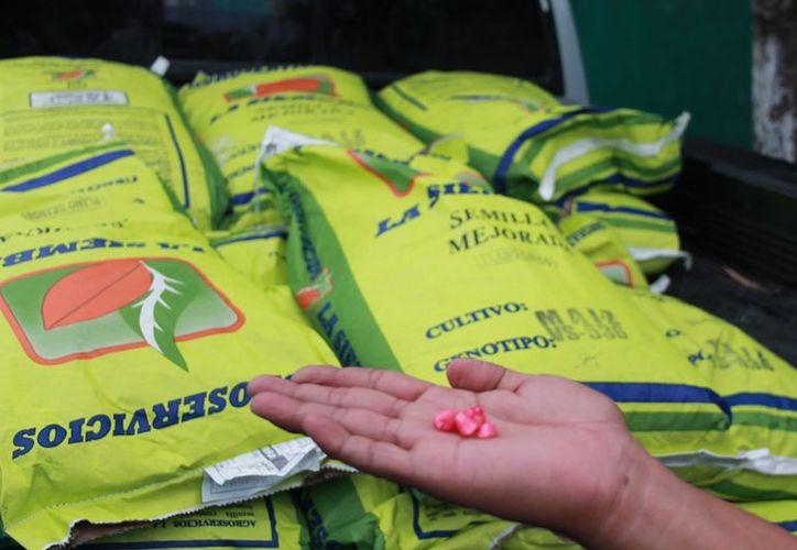 Esperan las primeras lluvias para cultivar su parcela con dos hectáreas de maíz, que le permita almacenar para el consumo de un año. (Javier Ortiz / SIPSE)