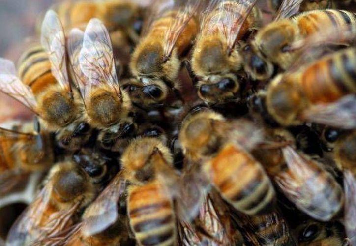 El afectado cortaba una palmera cuando cayó un panal y las abejas lo atacaron. (Foto: Contexto/Internet)