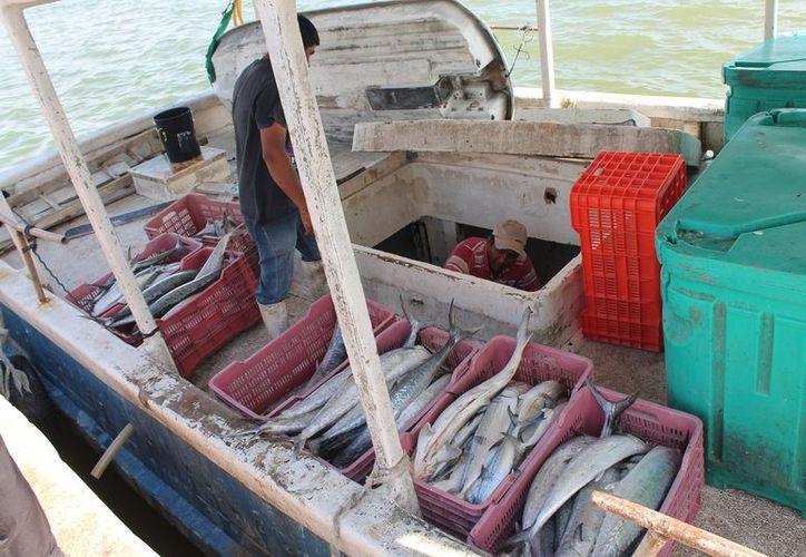 El incremento a la gasolina y las vedas afectan a los hombres del mar. (Raúl Balam/SIPSE)