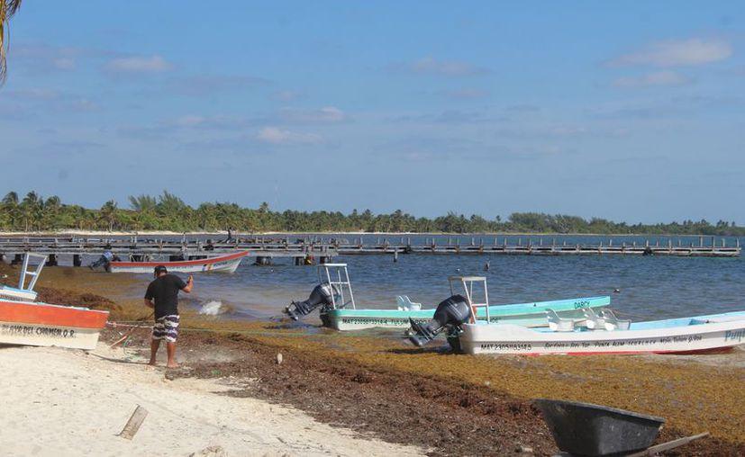 En Punta Allen, la captura del crustáceo este año es de apenas 35 toneladas. (Sara Cauich)