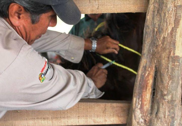 Aseguran que para la salud animal, el recurso se contempla para la prevención de enfermedades y el proyecto de emergencia sanitaria. (Edgardo Rodríguez/SIPSE)