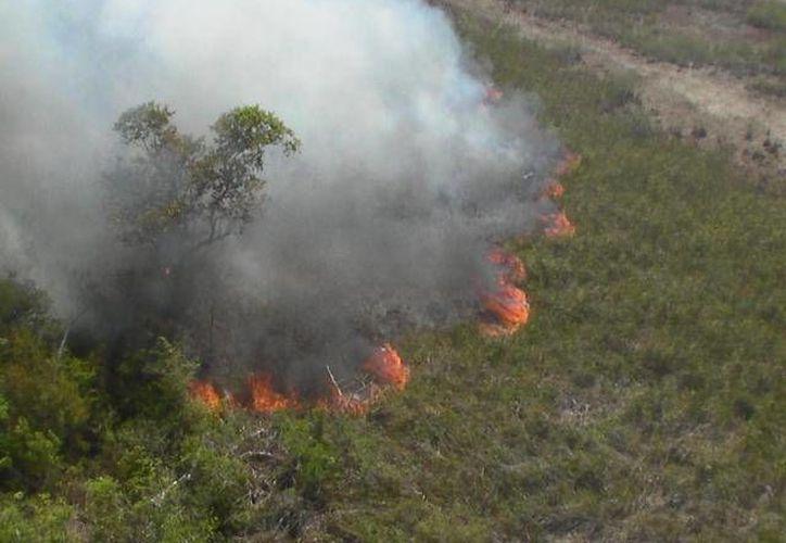 En Yucatán, entre el 5 y 14 de mayo, hubo 28 incendios que consumieron 76 hectáreas. (Imagen de contexto/Novedades de Quintana Roo)