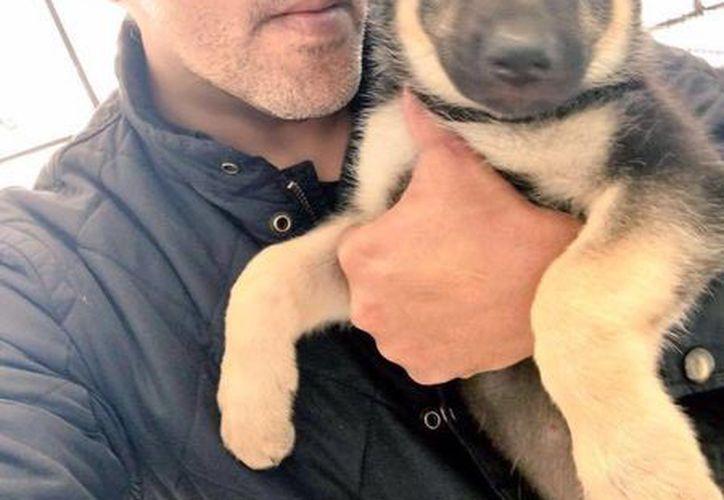 El actor aseguró que está planeando seriamente evidenciar el maltrato animal que se realiza en Yucatán, a nivel mundial. (Facebook Official Raul Julia Levy)