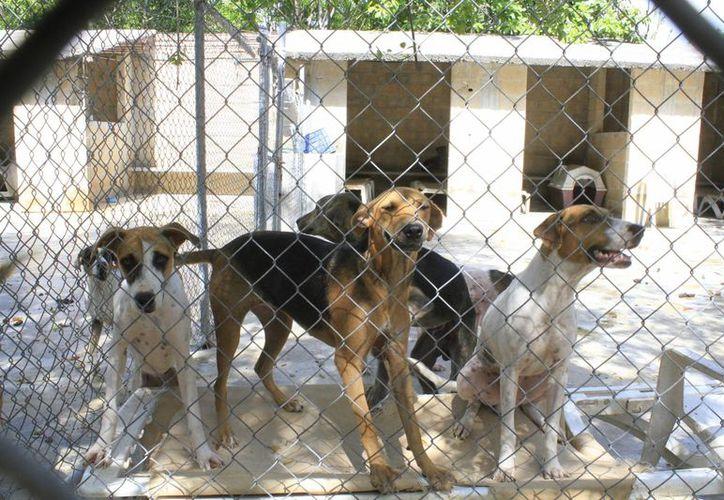 Buscan beneficios para el refugio que alberga a 170 perros. (Sergio Orozco/SIPSE)