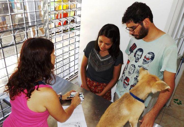 Este domingo se realizará una jornada de adopción de perros y gatos en el fraccionamiento Bosque Real. (Daniel Pacheco/SIPSE)