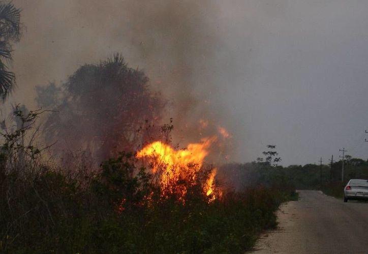En cada temporada se registran incendios en el estado. (Israel Leal/SIPSE)
