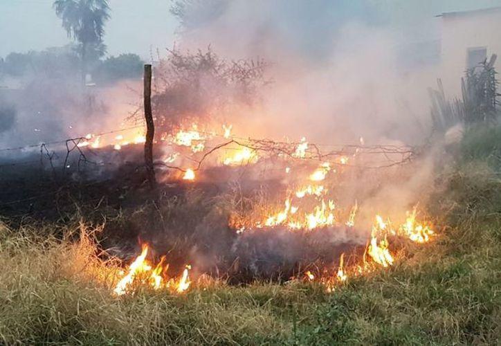 El fuego ha consumido ya más de 700 hectáreas de vegetación en el sur de Quintana Roo.  (Daniel Tejada/SIPSE)