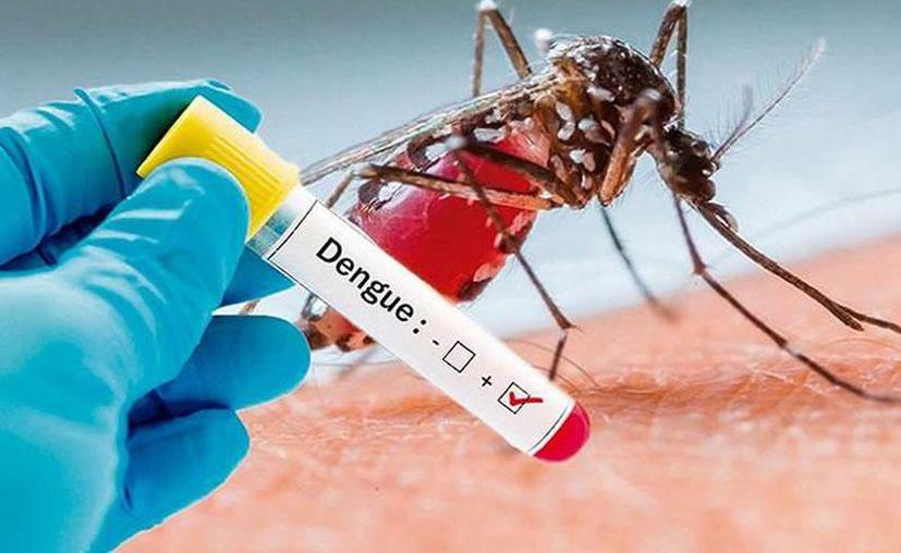 La cifra de casos de dengue de este 2019, ya supera al total de 2016. (Archivo/Sipse)