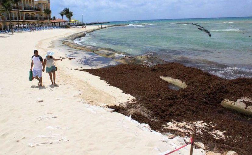 El arribo masivo del sargazo no necesariamente es un impedimento para disfrutar las vacaciones en la playa. (Archivo/SIPSE)
