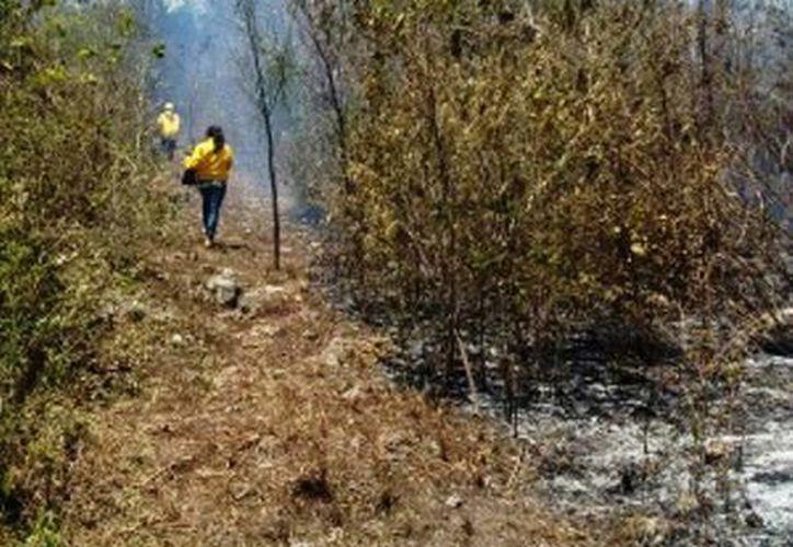 En el incendio se encuentran trabajando 20 elementos. (Edgardo Rodríguez/SIPSE)