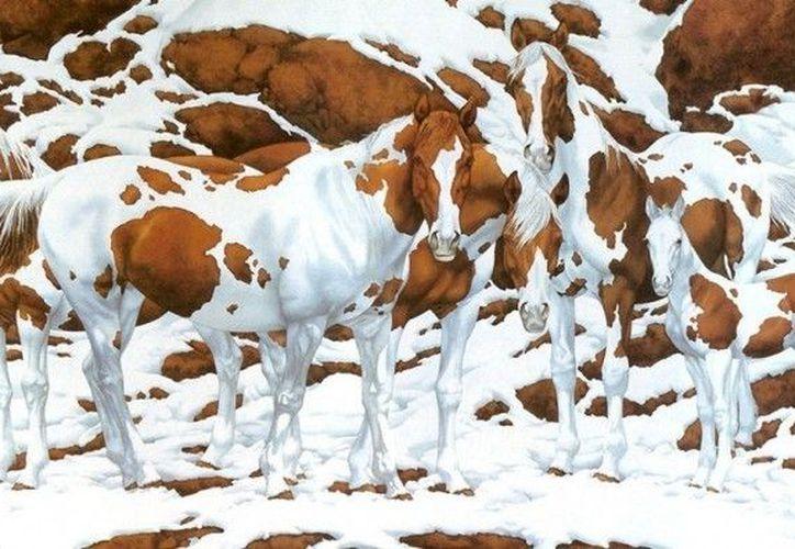 ¿Cuántos caballos logras distinguir? en la imagen.