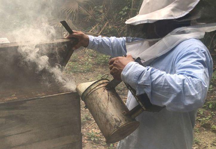 Preparan jarabe de azúcar para mantener a las abejas en los apiarios, pero la mayoría de los apicultores carece de los recursos necesarios para adquirir el endulzante. (Javier Ortiz/SIPSE)