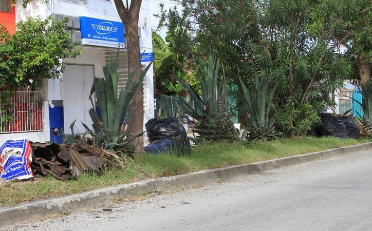Precisó que los nueve camiones y el personal de la dirección a su cargo, trabaja en tres turnos. (Octavio Martínez/SIPSE)