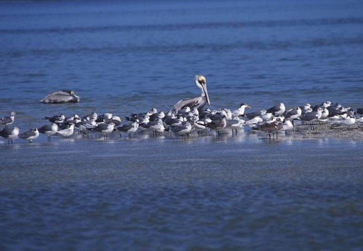 Los ambientes poseen especies endémicas y riqueza natural. (Israel Leal/SIPSE)