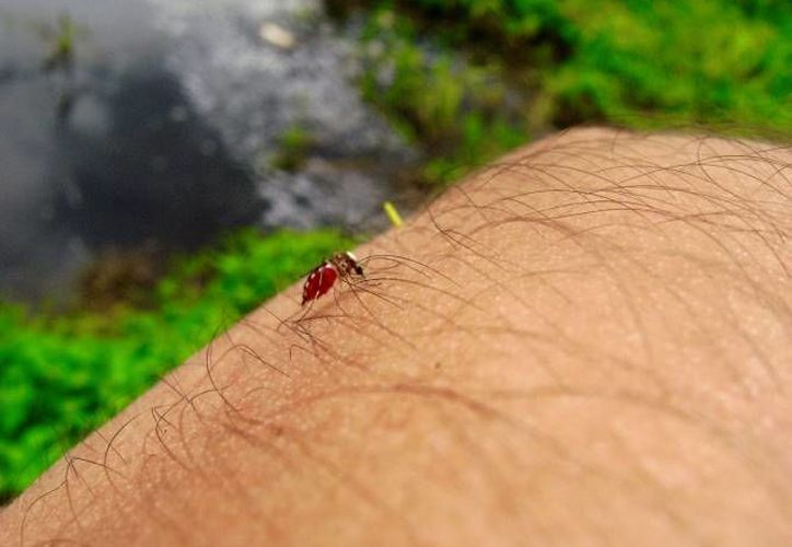 Hasta el 21 de noviembre de este año se confirmaron seis mil 642 casos de zika. (Redacción/ SIPSE)