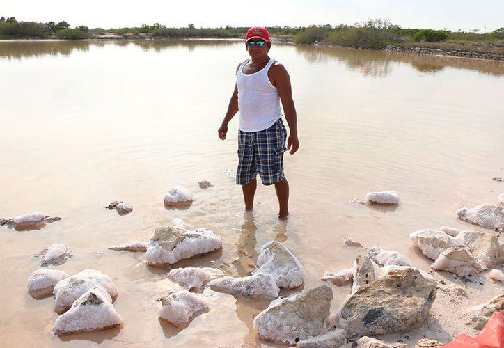 La salinera cuenta con más de 100 pozas con capacidad de producción de cientos de toneladas de sal de mar. (José Acosta/Milenio Novedades)