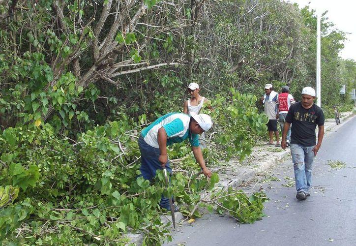 El Ayuntamiento de Progreso asegura que la poda del mangle se hace con permiso de la Semarnat. (Manuel Pool/SIPSE)