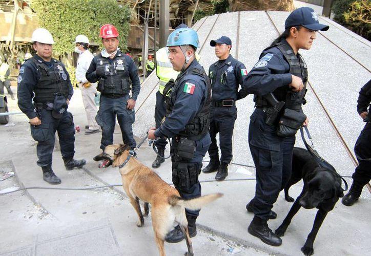 Las labores de rescate se intensificaron tras el aviso de los perros. (Notimex)