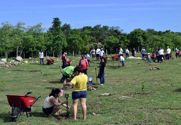 Numerosas familias se sumaron a la campaña 'Un bosque nuevo'. (Milenio Novedades)