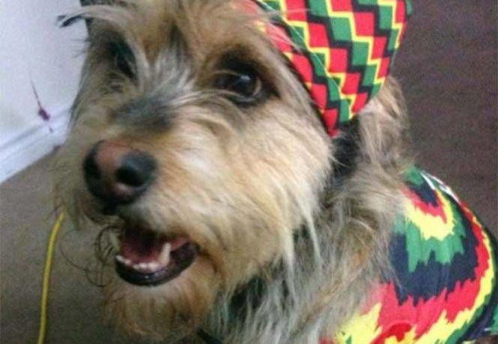 Aunque lo dudes, los perros tienen una preferencia musical. (Twitter @OWSLIFE666)
