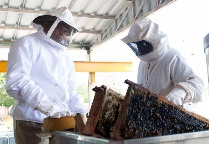 Empresarios yucatecos de miel destacaron en la feria Foodex realizada en Arabia Saudita, que es sexto productor de miel a nivel mundial. (SIPSE)