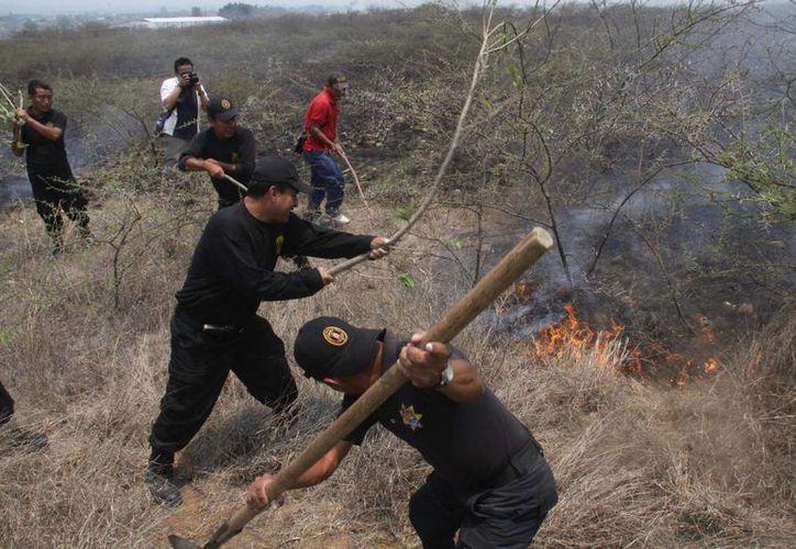 Conafor informa que más de ocho mil incendios forestales se han registrado en el país. (Notimex)