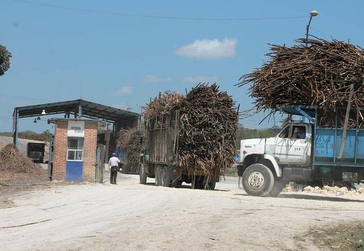 Este lunes se entregaron siete mil toneladas de caña al batey. (Edgardo Rodríguez/SIPSE)