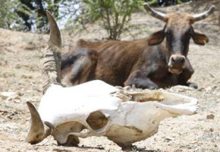 Cada año las fechas de sequía se van prolongando en un mayor periodo. (Milenio)