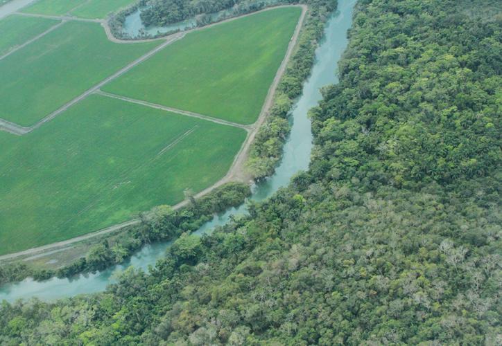 La autoridad ambiental considera que el plan puede dañar la flora y fauna del sitio. (Joel Zamora/SIPSE)