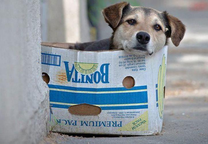 En el Cemca hay 44 animales, entre caninos y felinos que permanecen bajo resguardo, en espera de ser reclamados por sus dueños. (Foto: Milenio Novedades)