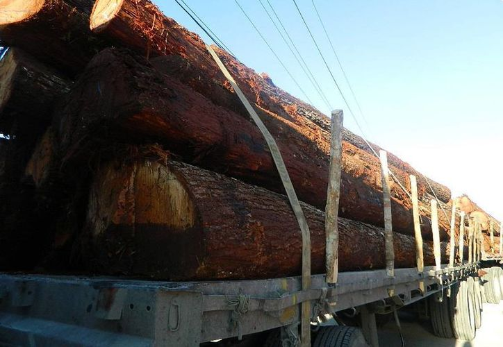 Durante los operativos se aseguraron ocho  tráileres que transportaban madera. (Cortesía)