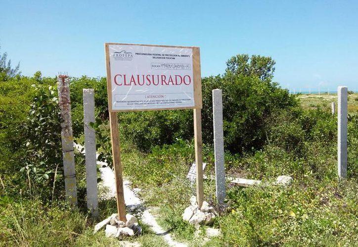 Profepa instaló un letrero de clausura en el lugar de eliminación de vegetación de matorral costero con presencia de manglar blanco y  botoncillo. (Milenio Novedades)