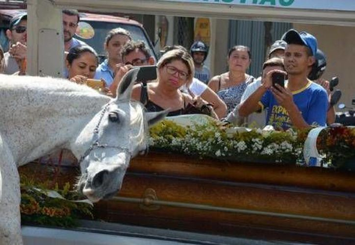 El caballo de Wagner Figueiredo de Lima, funcionario de Cajazeiras, conmocionó a los asistentes debido a su reacción. (Foto tomada de tiempo.com.mx)