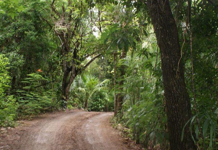 Tienen a su cargo el cuidado de 600 hectáreas de selva ubicadas entre el municipio de Benito Juárez y Lázaro Cárdenas. (Redacción/SIPSE)