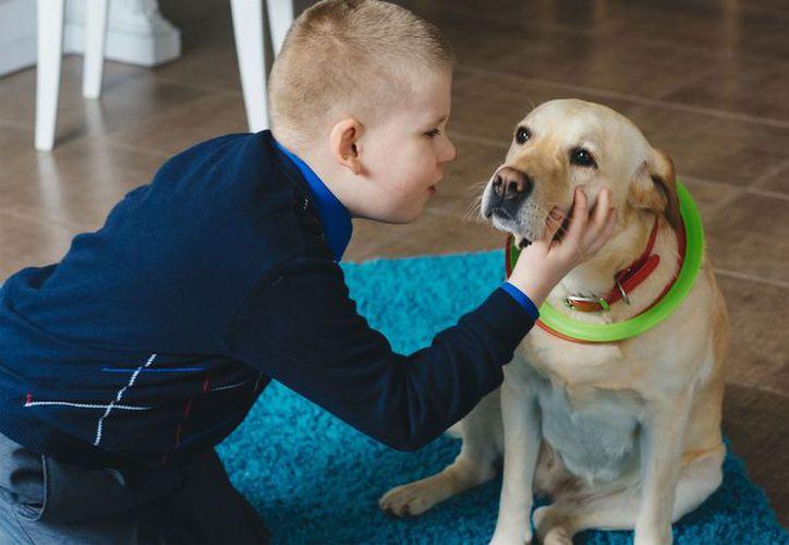 Los perros suelen ser los más comunes,  para ser educados y entrenados para las tareas de ayuda. (Foto: Contexto)