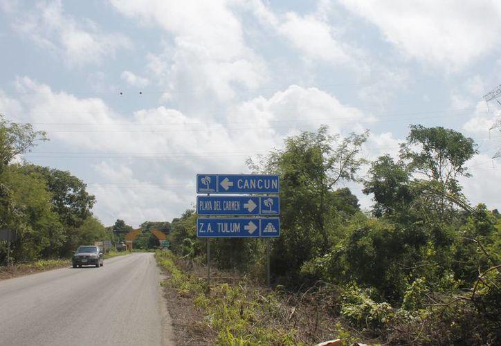 Tres especies de árboles de Quintana Roo fueron reconocidas para formar parte del compendio nacional de árboles notables e históricos. (Israel Leal/SIPSE)